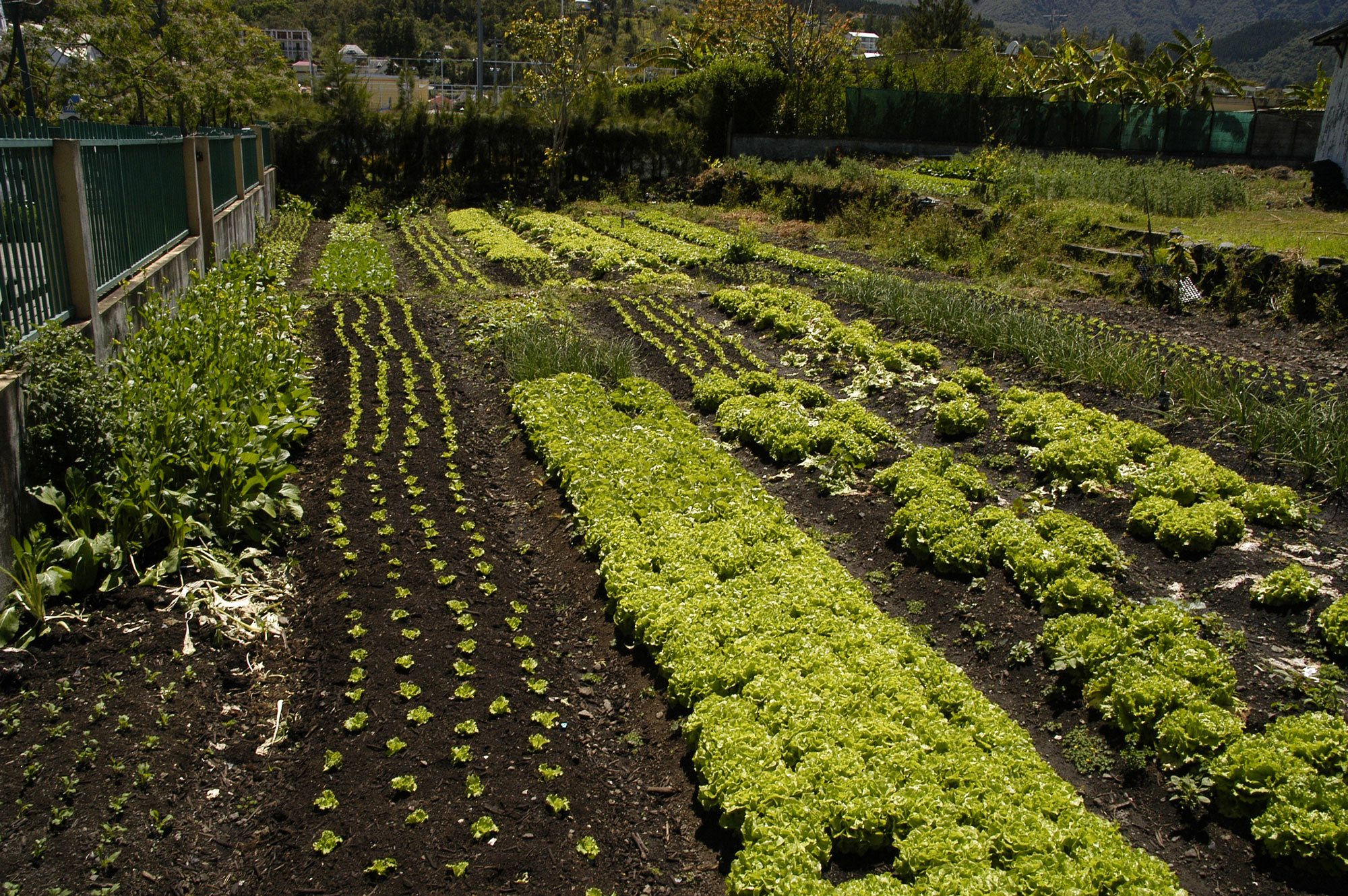 beautiful vegetable garden the